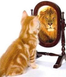 cat-lion-mirror
